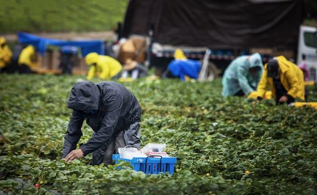 denuncia-carolina-del-norte-no-protegio-a-trabajadores-esenciales-contra-el-covid-19