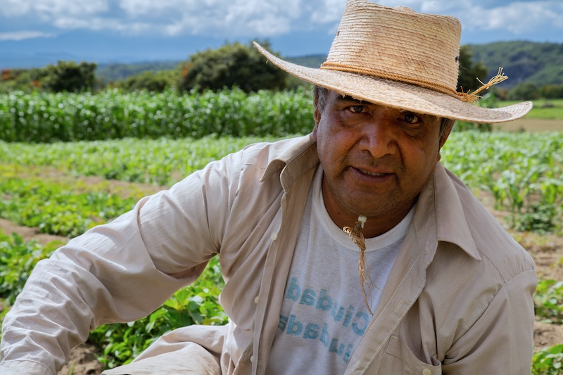 """Aprueban proyecto de ley para dar """"greencard"""" a trabajadores agrícolas indocumentados"""
