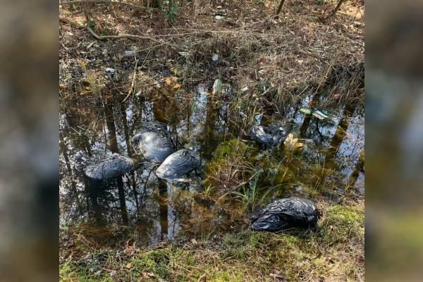 Encuentran 10 perros muertos en bolsas de plástico en Carolina del Norte