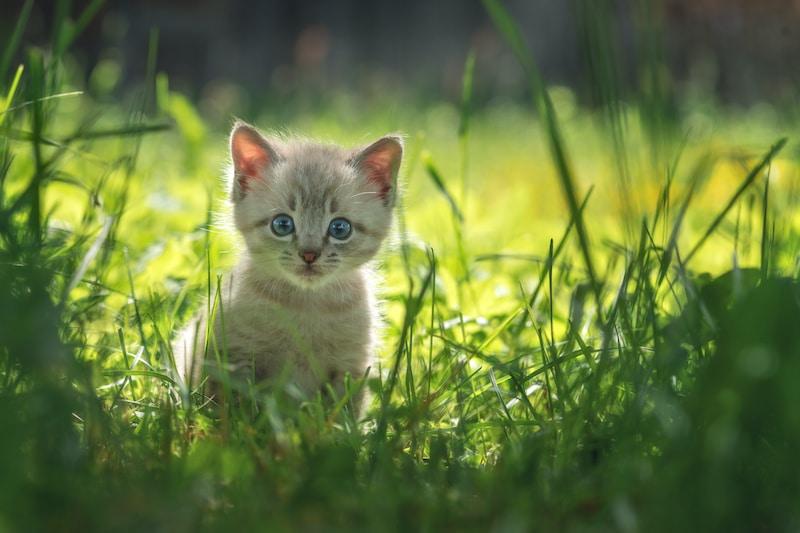 """Comienza """"temporada de gatitos"""": ¿qué hacer si encuentra gatos recién nacidos en la calle?"""