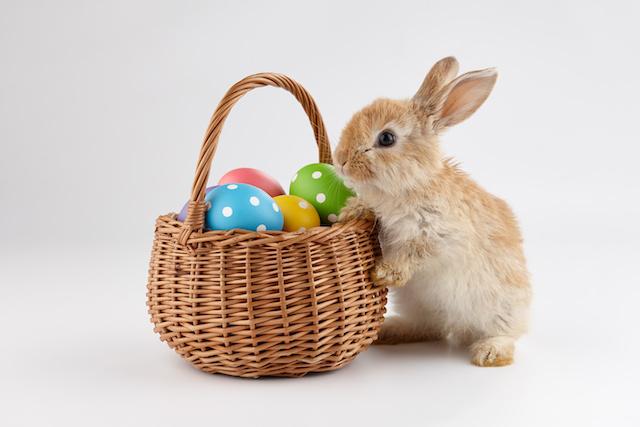Conejo de pascua: ¿cuál es el origen de la tradición?