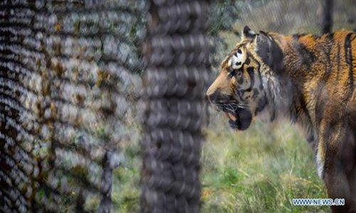 Tigres-cautiverio-Estados-Unidos