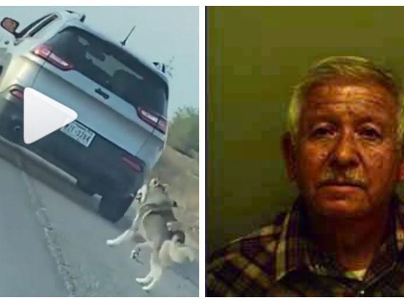 latino texas perro carretera