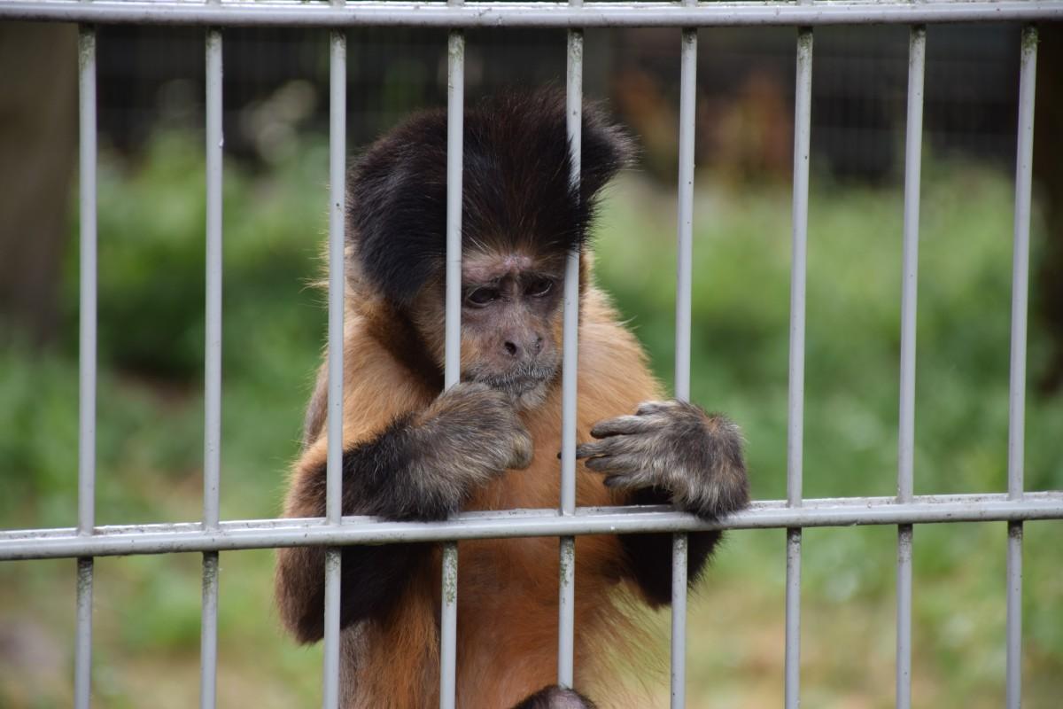 Falta de empleados cierra algunas exhibiciones del zoológico de Carolina del Norte