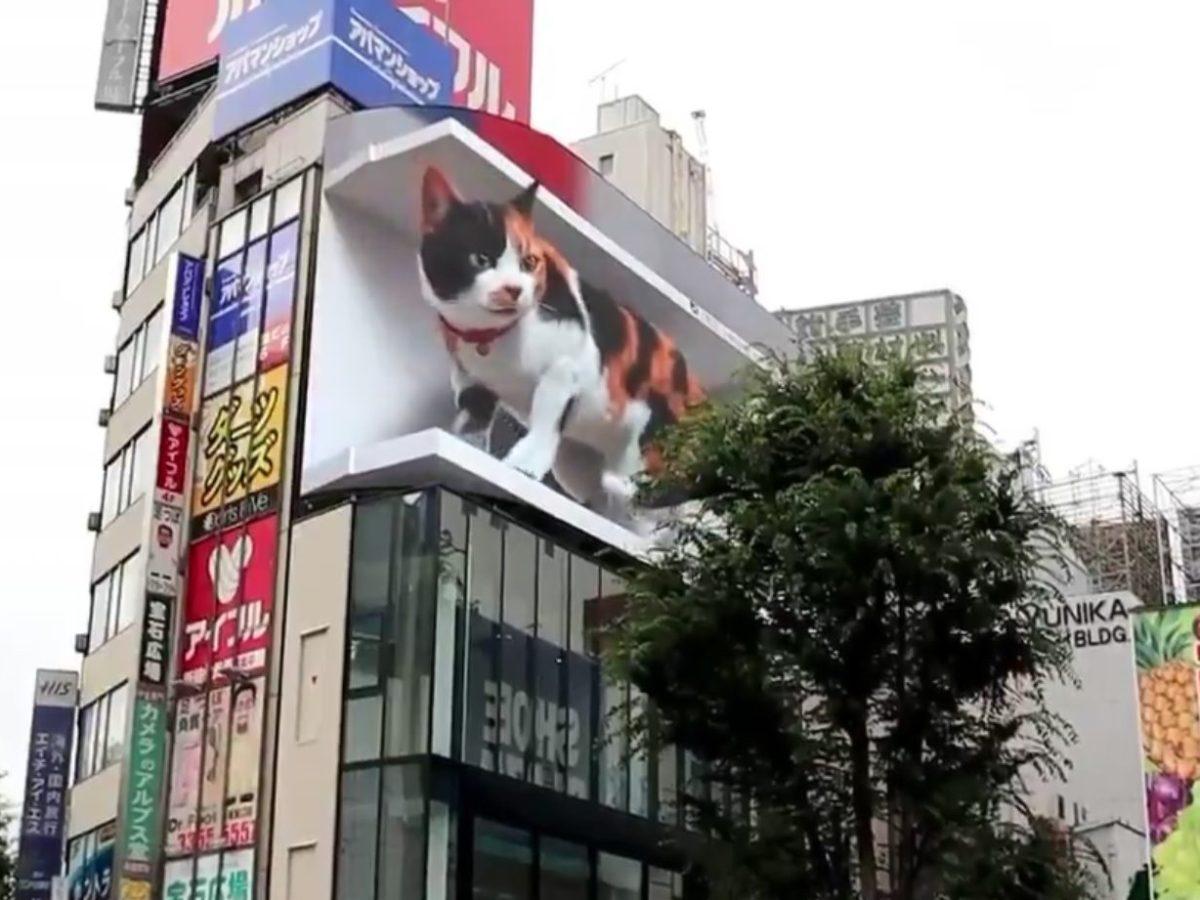 gato gigante tokio viral