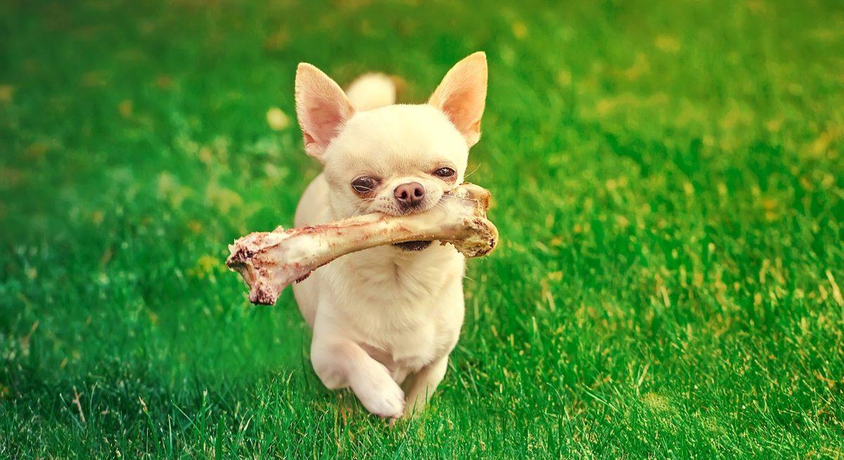 Hueso humano encontrado en un parque para perros en Carolina del Norte