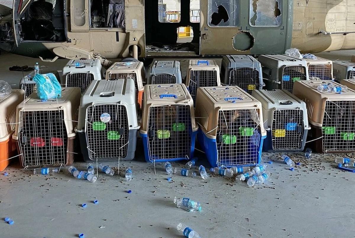 Pentágono niega abandonar perros Afganistán