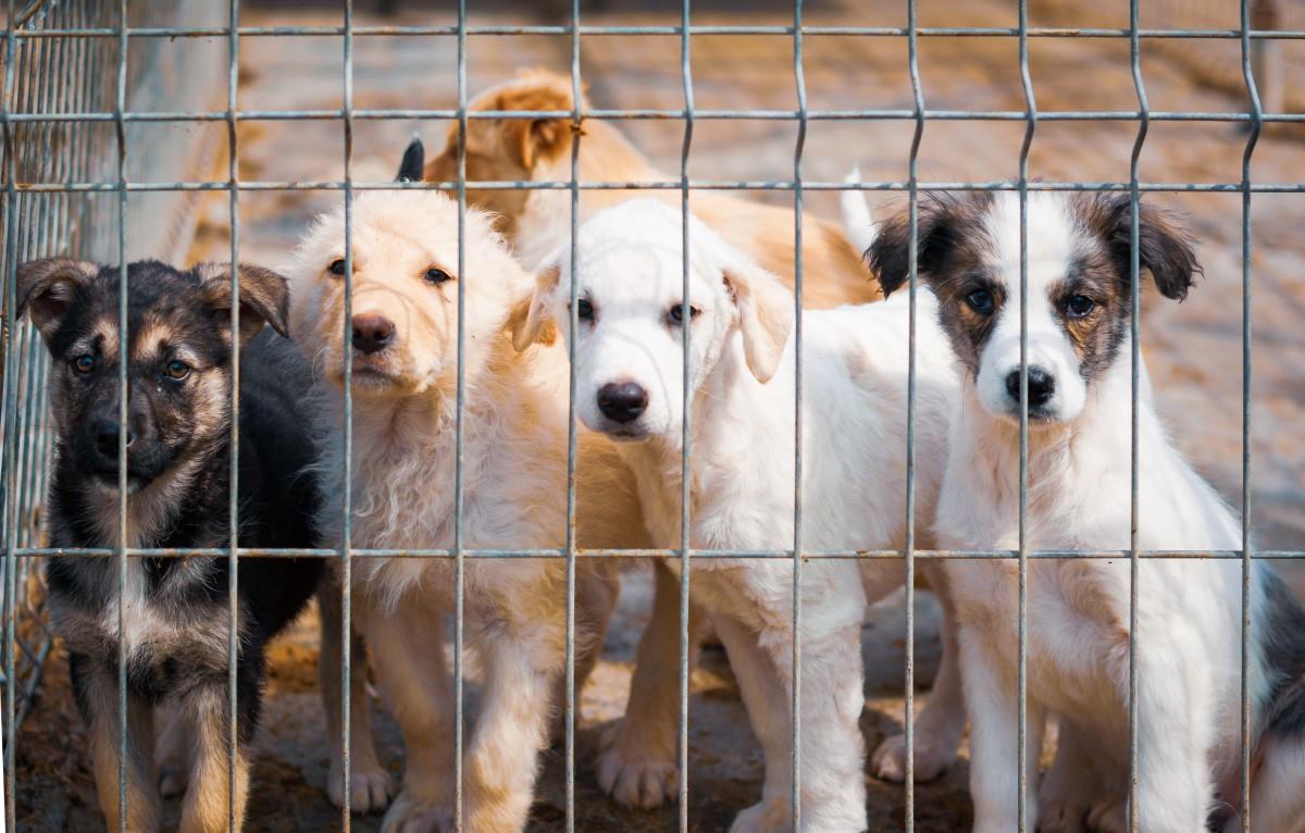 Refugio de animales de Cumberland elimina las tarifas de adopción