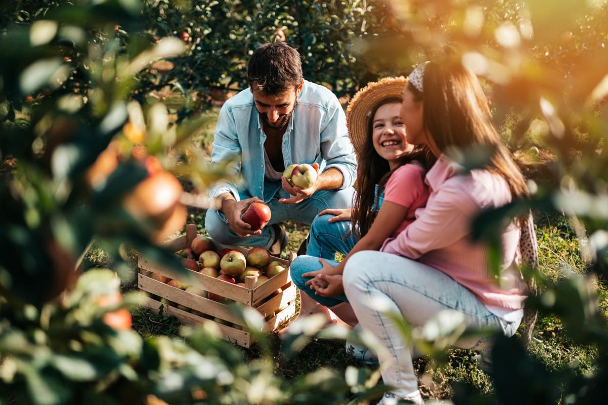 Elija sus propias manzanas en esta granja cerca de Charlotte