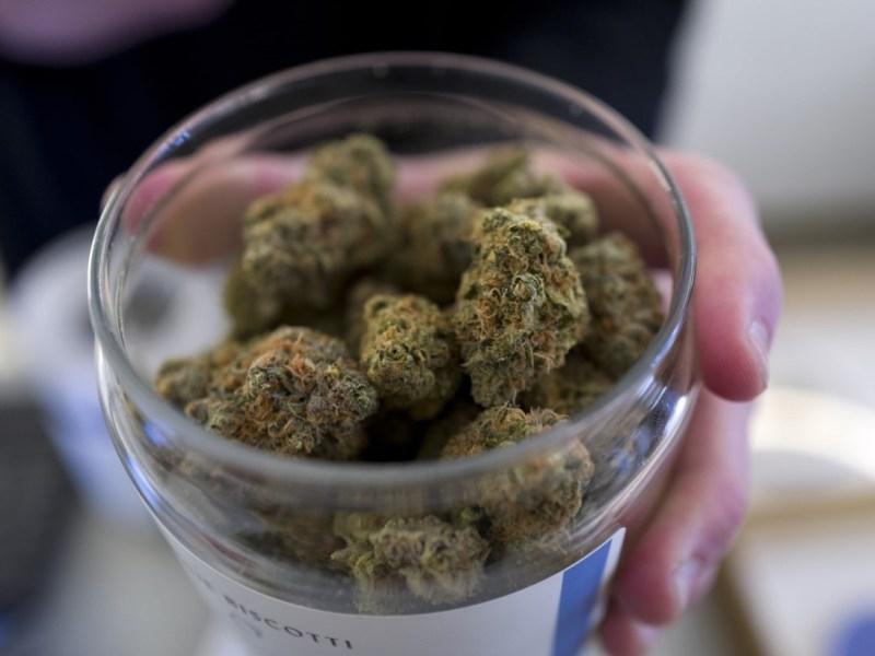 Consumidores marihuana probabilidad infartos