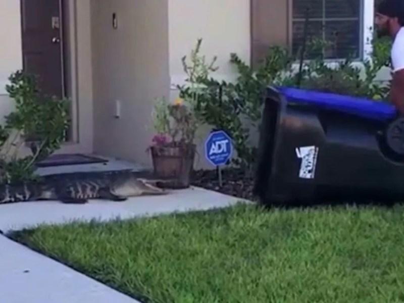 Hombre atrapa cocodrilo Florida bote basura