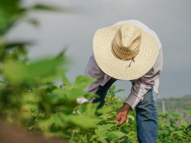 Jueza falla a favor de sindicatos de trabajadores agrícolas en Carolina del Norte