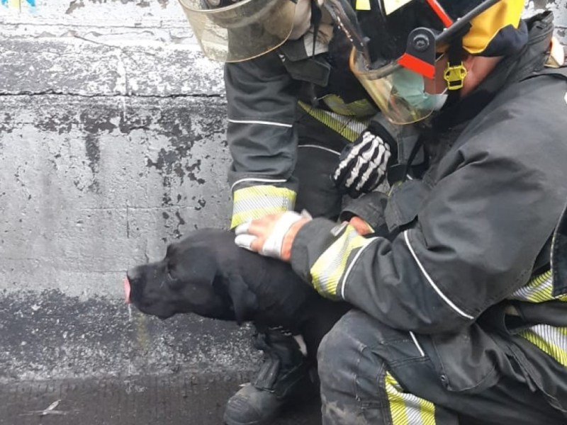 bomberos rescatan perrito fosa