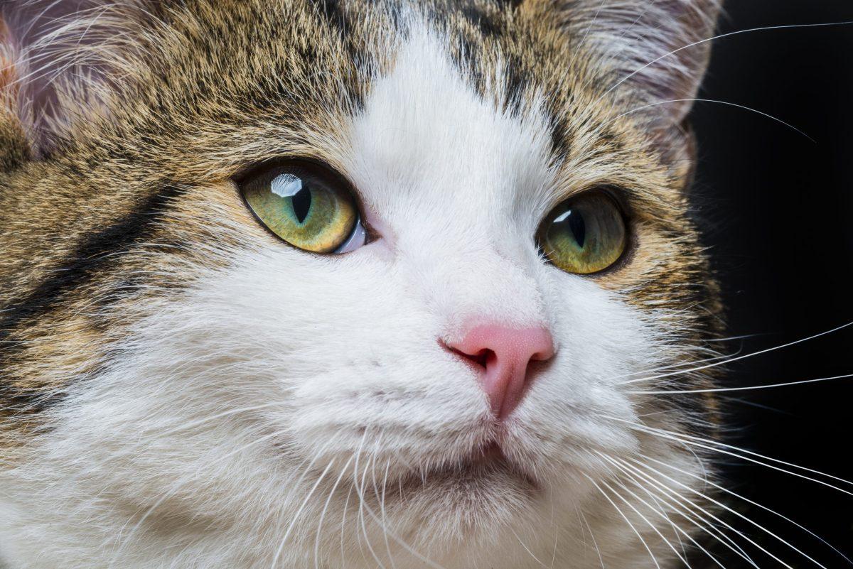incendio-en-refugio-provoca-muerte-de-mas-de-20-gatos