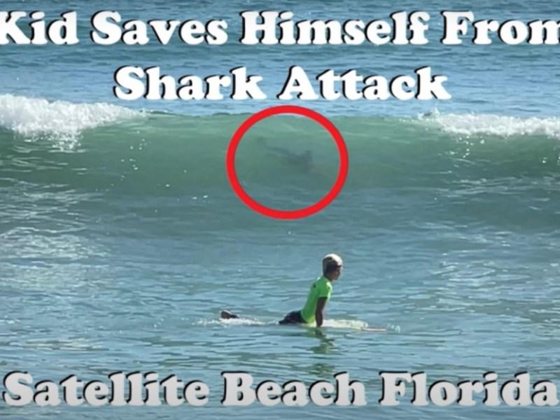 video niño escapar ataque tiburón