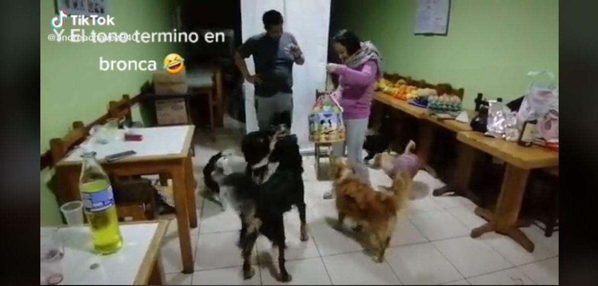 fiesta perritos pelea piñata