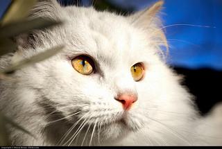 Bev's Cat