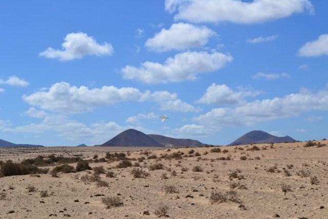 Birdwatching Desert lanzarote