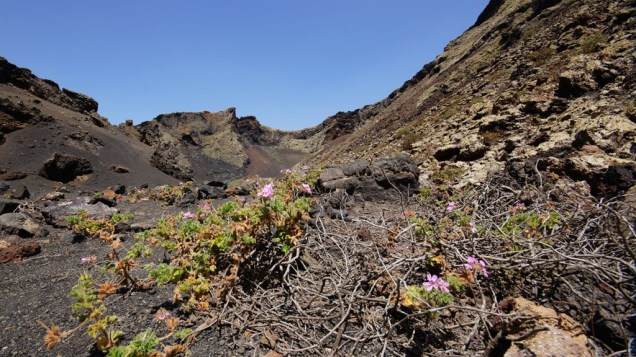 Cuervo Crater Flowers