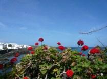 geraniumspmandplane