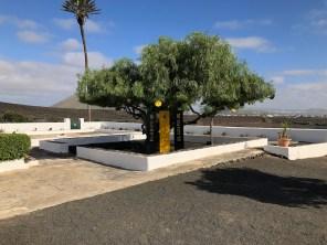 El Grifo tree