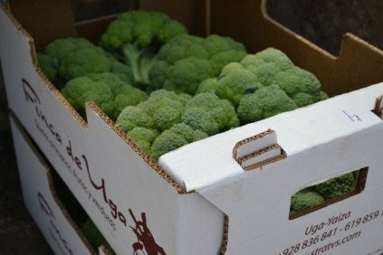 Finca de Uga brocoli_2