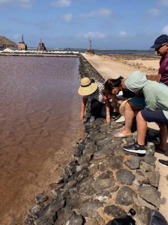 Brine shrimp at Salinas de Janubio