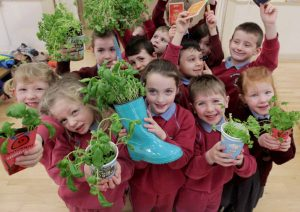 Laois Primary Schools Invited To Apply For Free GIY Pack
