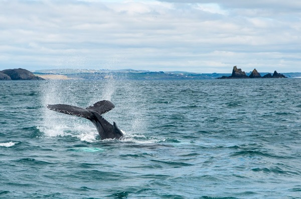 Discover Europe's undiscovered wildlife frontier with Ireland's Wildlife Tours