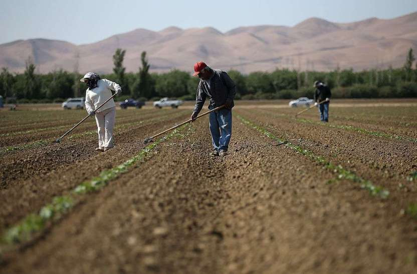 gettyimages 470891648 - Despiden a campesinos que se contagiaron con COVID y denunciaron condiciones laborales