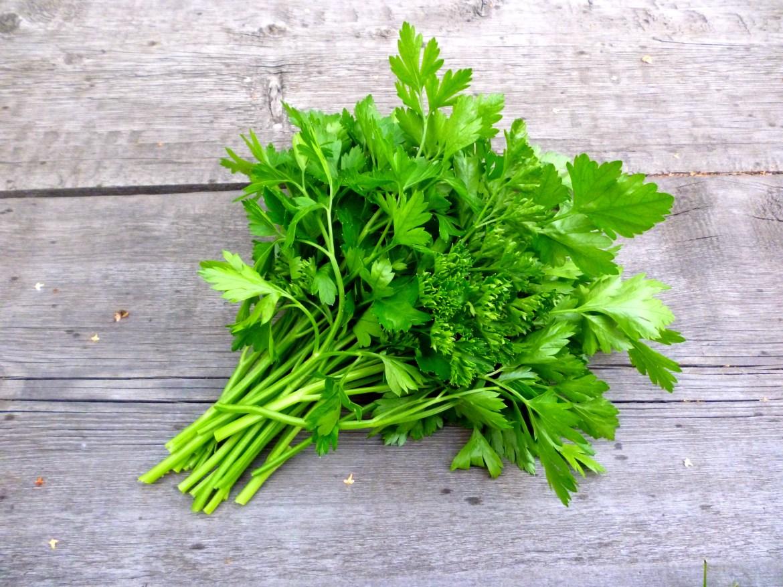 Estas son las grandes diferencias entre el cilantro y el perejil | La  Opinión