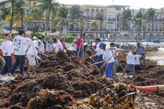 Reforzaremos trabajos en playas ante recale de sargazo: Samaria Angulo