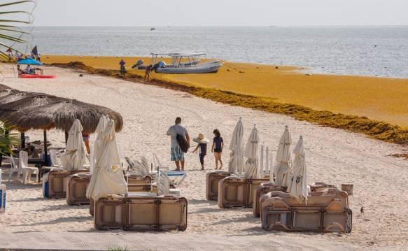 """Pide Torruco """"evitar una inminente crisis ecológica y turística"""" por sargazo"""