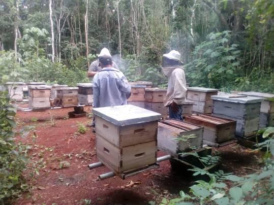 Se compromete empresario que provocó muerte masiva de abejas en ejido maya a cerrar su plantío de chile