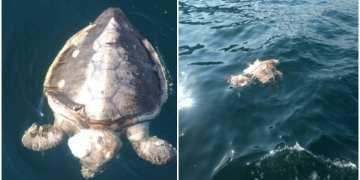 tortugas muertas