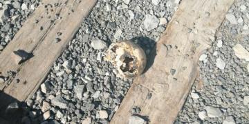 cráneo en SLP