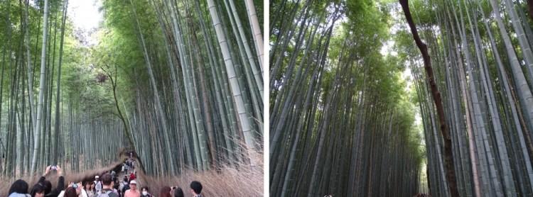 arashi 8