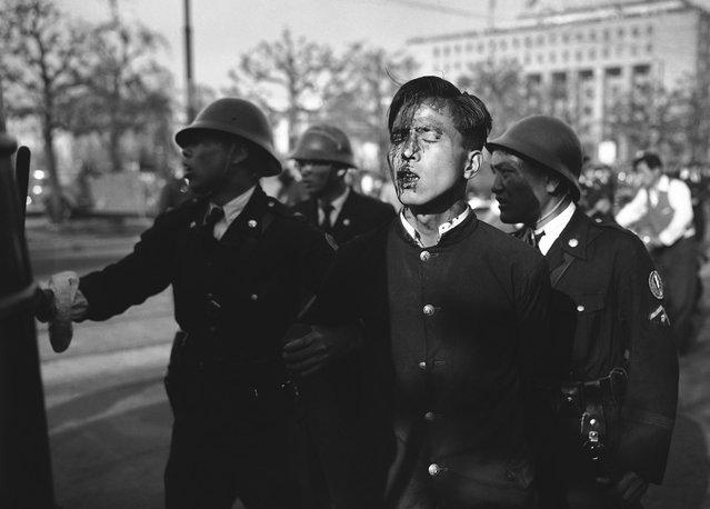 Seorang pemuda Jepang yang terluka, dituntun keluar oleh anggota kepolisian dari tempat kerusuhan setelah para demonstran pro-komunis dibubarkan dekat istana kekaisaran di Tokyo, pada 1 Mei 1952. (Photo by AP Photo via The Atlantic)