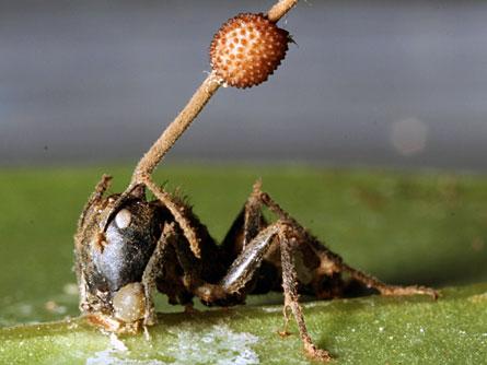 6 Hewan Parasit Menyeramkan Di Bumi!
