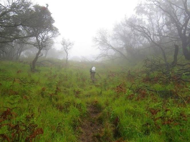 Mengapa Pendaki Bisa Tersesat di Gunung Arjuna dan Welirang?