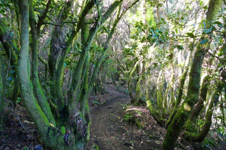 Wanderpfad - Paradies