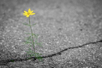 Blume - Klimaveränderung