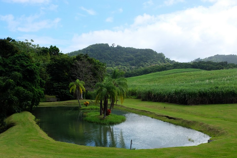 Jardin de L'Habitation Clément en Martinique