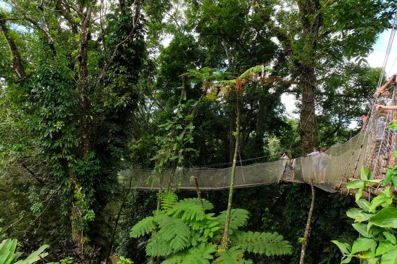 Pont de singe au Jardin de Balata