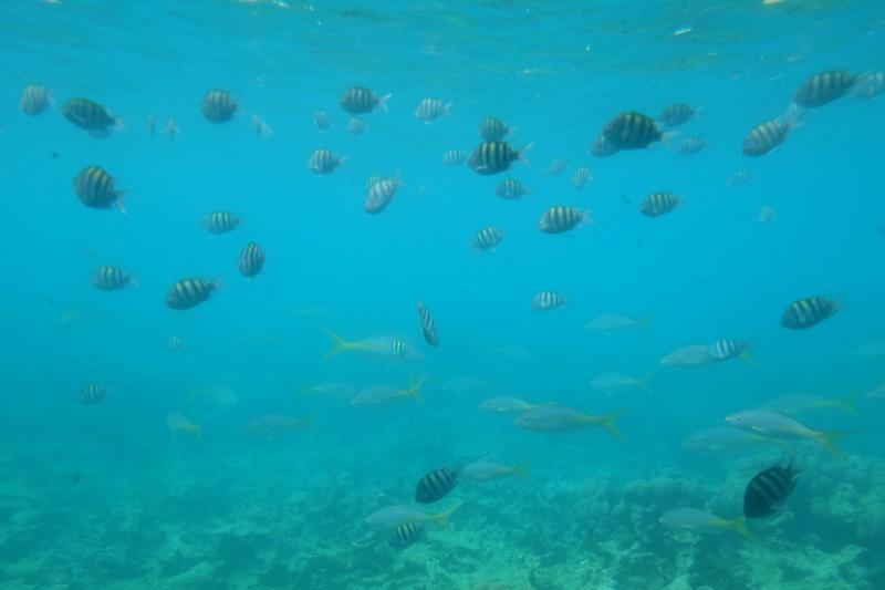 Fonds marins en Martinique