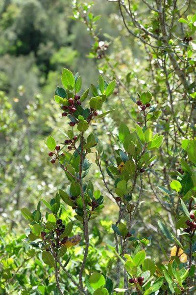Végétation méditerranéenne à Peillon