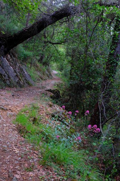 Sentier de randonnée à Peillon