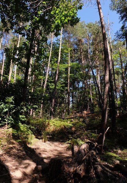 Forêt à Annot
