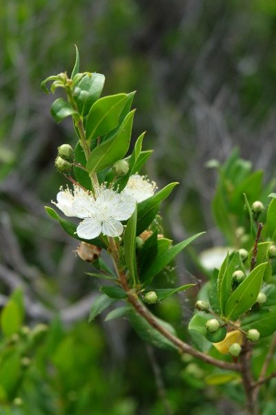 Végétation au Cap Martin