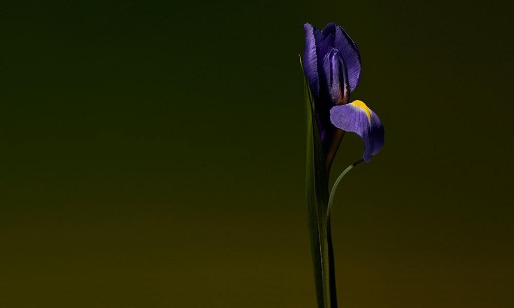 Iris Shot d'Olfactive Studio, cliché de Roberto Greco, compostion de Dominique Ropion